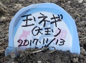 畑畝・野菜2