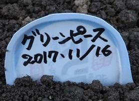 畑畝・野菜9