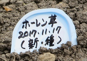 畑畝・野菜10