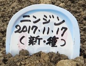 畑畝・野菜11