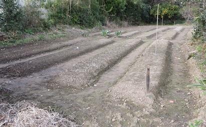 西の畑・1
