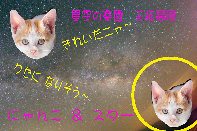 星空の楽園 天狗高原 猫と星001