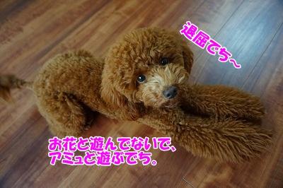 c-DSC02001.jpg