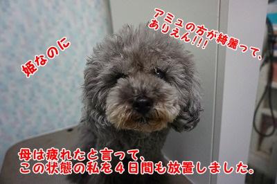 s-DSC01896.jpg