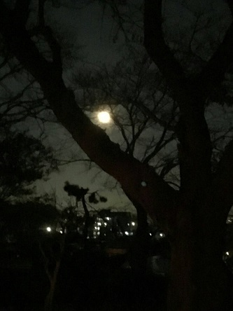 なごみ邸の夜