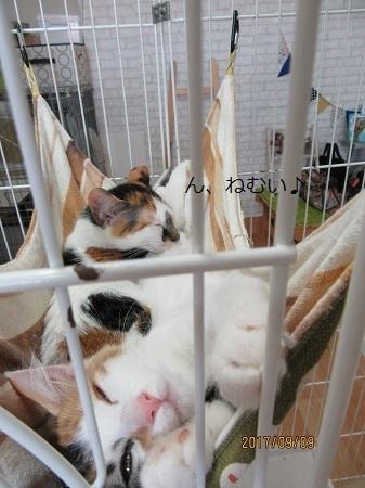アニファ猫1
