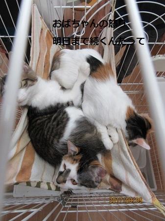 アニファ猫3