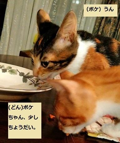 ポケどん_20171105_195053ポケちゃんのおこぼれ1