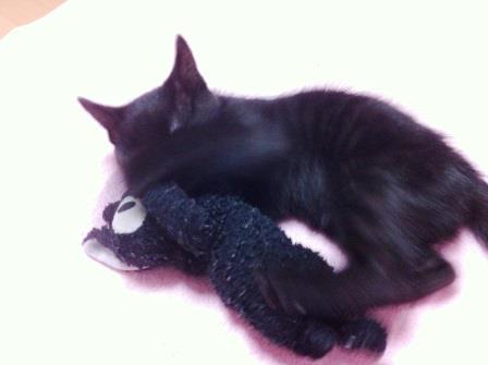 黒猫VS黒猫1