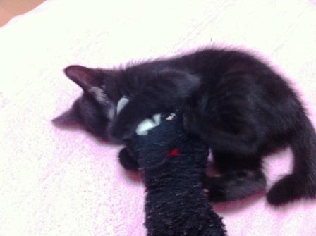 黒猫VS黒猫2