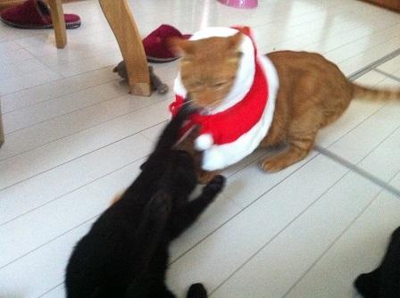 サンタと黒猫