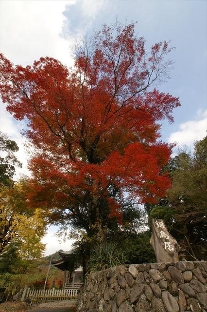英彦山神社 紅葉-1