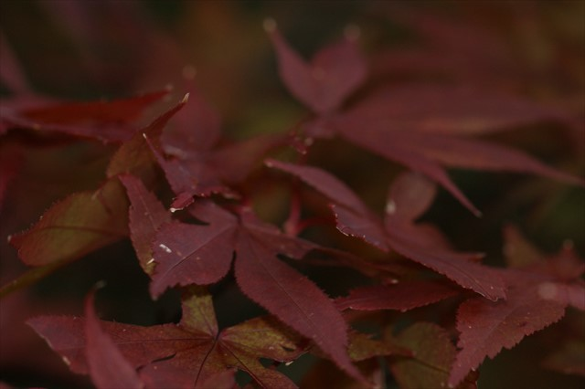 英彦山神社 紅葉-2