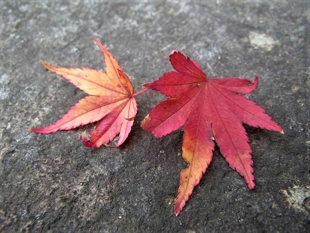 英彦山神社 紅葉-3