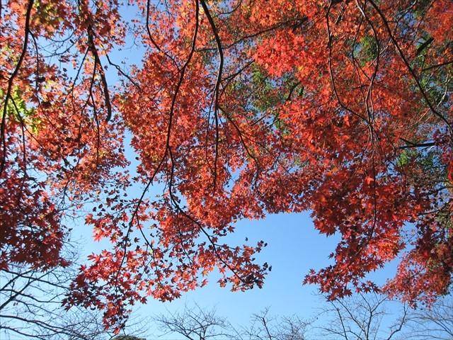 添田公園の紅葉