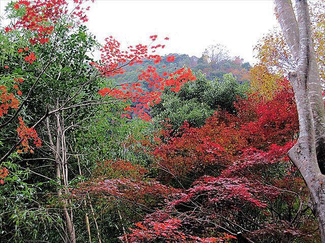 耶馬渓の紅葉-1