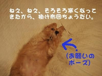 写真2601(№445)1