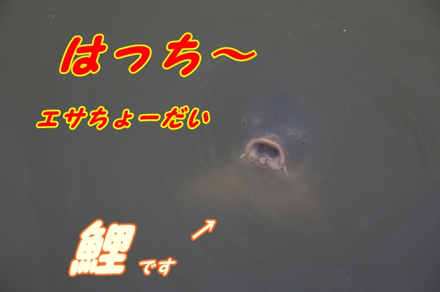 IMG_4004-14.jpg