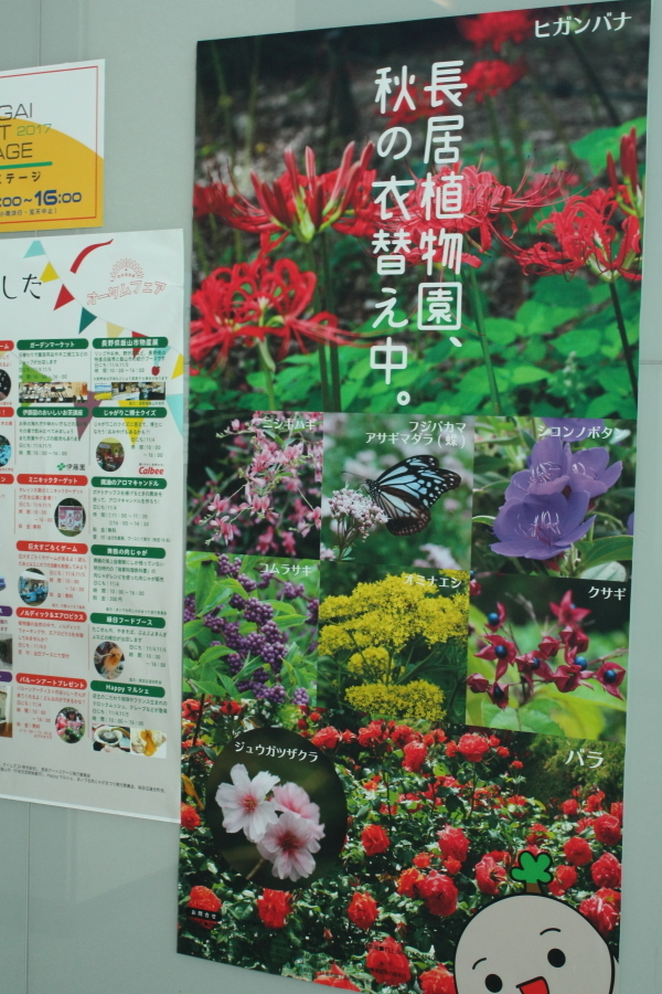 Nagai Botanical Garden : Rose Garden