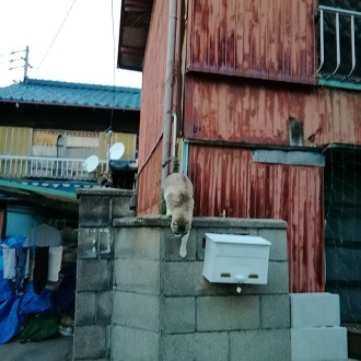 IMG_20171117_163823_1.jpg