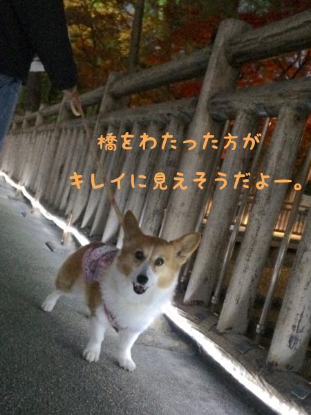 030_convert_20171209120913.jpg