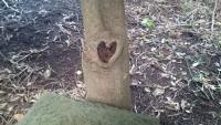 ハートのマークがある神社の木