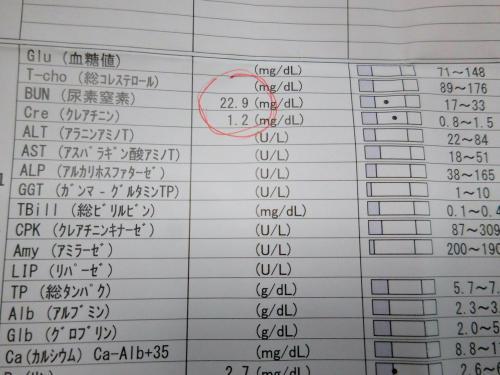 くぅ血液検査11月