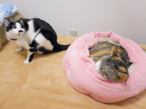 みくピンクベッド