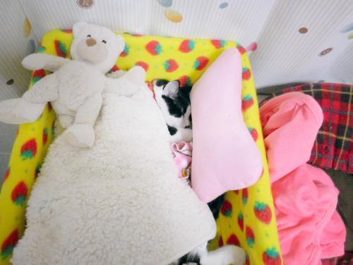 くぅ毛布の中