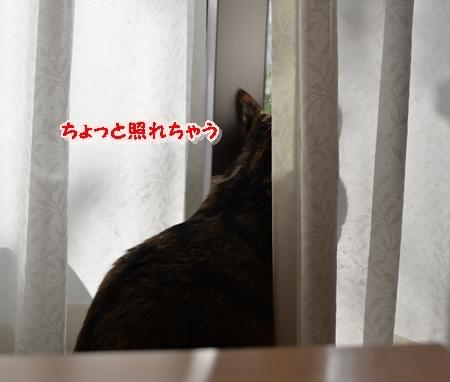 DSC_7058.jpg