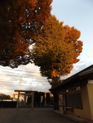 20171111御嶽神社3
