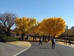 20171124昭和記念公園1
