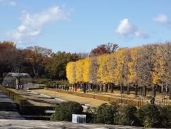 20171124昭和記念公園2