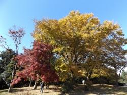 20171124昭和記念公園6