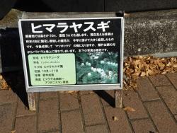 20171124昭和記念公園10