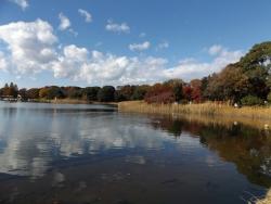 20171124昭和記念公園15