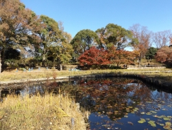 20171124昭和記念公園19
