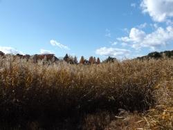 20171124昭和記念公園20