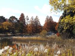 20171124昭和記念公園24