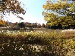 20171124昭和記念公園23