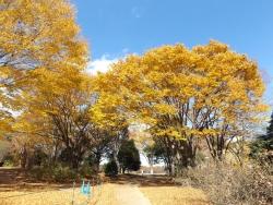 20171124昭和記念公園29