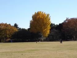 20171124昭和記念公園38