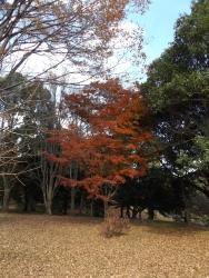20171124昭和記念公園39