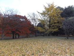 20171124昭和記念公園40