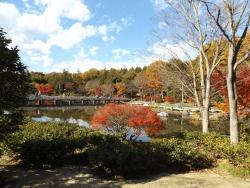 20171124昭和記念公園43