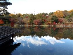 20171124昭和記念公園47