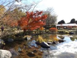 20171124昭和記念公園44