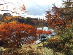 20171124昭和記念公園54