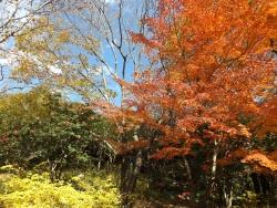 20171124昭和記念公園53