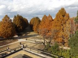 20171124昭和記念公園59